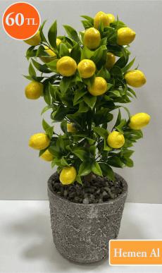 limon agacı