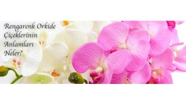 Rengarenk Orkide Çiçeklerinin Anlamları Neler?