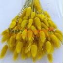 Sarı Pamuk Otu - Kuru Çiçek - Lagurus 1707