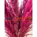 pembe renk pampas çiçegi