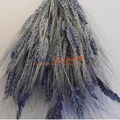 Mavi Başak Otu - Kuru Çiçek - 1405