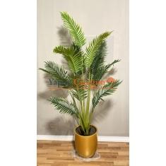 Areka  Ağacı - Dağ Palmiyesi - 200 cm