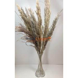 Pampas Çiçeği