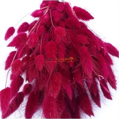 Kırmızı Pamuk Otu - Kuru Çiçek - Lagurus 1712
