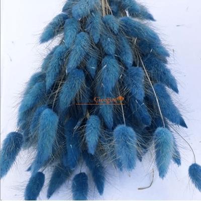 mavi pamuk otu