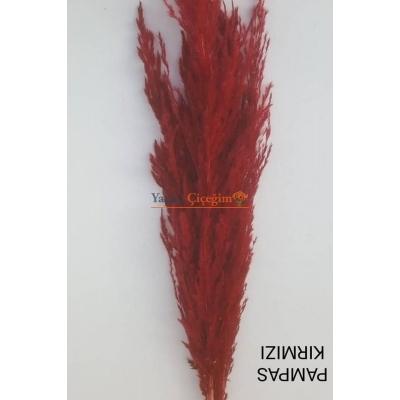 Kırmızı Pampas Otu - Kuru Çiçek - 1427