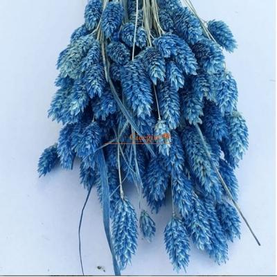 Mavi Kuş Otu - Kuru Çiçek - 1628