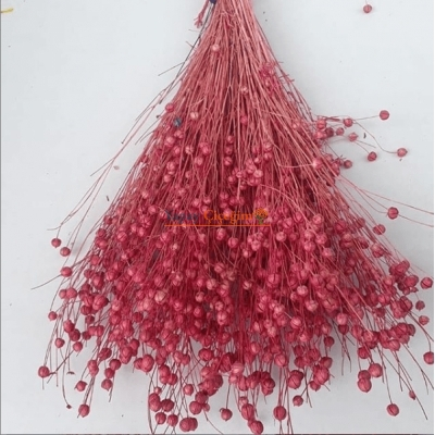 Pembe Keten Otu - Kuru Çiçek - 1650