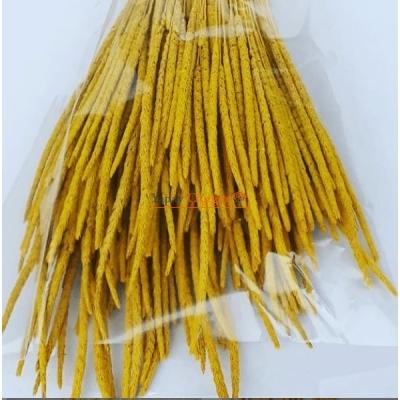 Sarı Solucan Otu - Kuru Çiçek - 1634