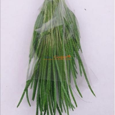 Yeşil Solucan Otu - Kuru Çiçek - 1631