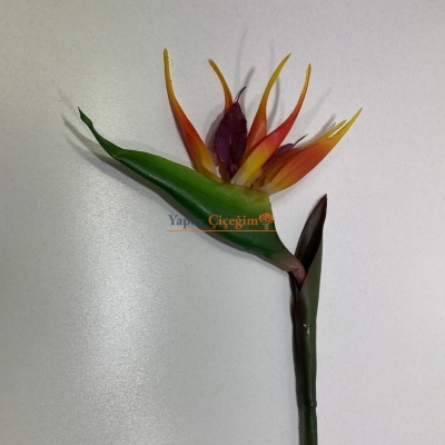 Starliçe Uzun Vazo Çiçeği