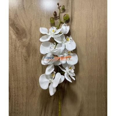 Ucuz Orkide