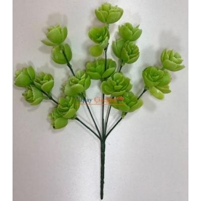 Skulent Görünümlü Demet Yeşillik 003