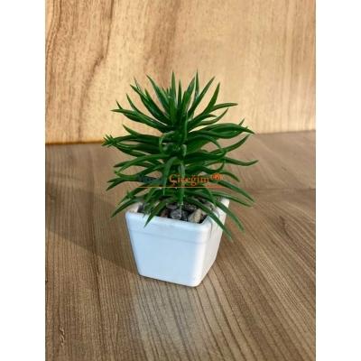 Mini Saksılı Çiçek 10 cm