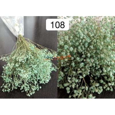 Yeşil Şoklu Cipso - Kuru Çiçek