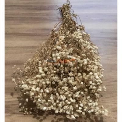Krem Şoklu Cipso - Kuru Çiçek