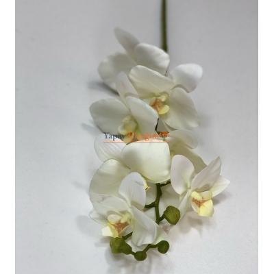 Beyaz Islak Orkide Orta Boy