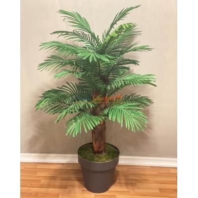 Toptan Palmiye Ağacı