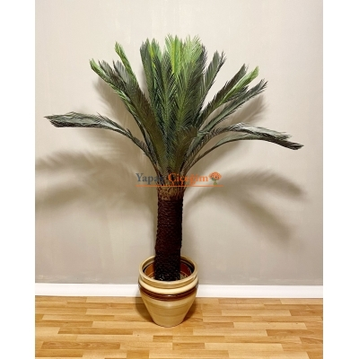 Yapay Sikas (cycas) Palmiye Ağacı