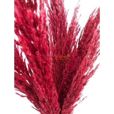 Kırmızı Pampas