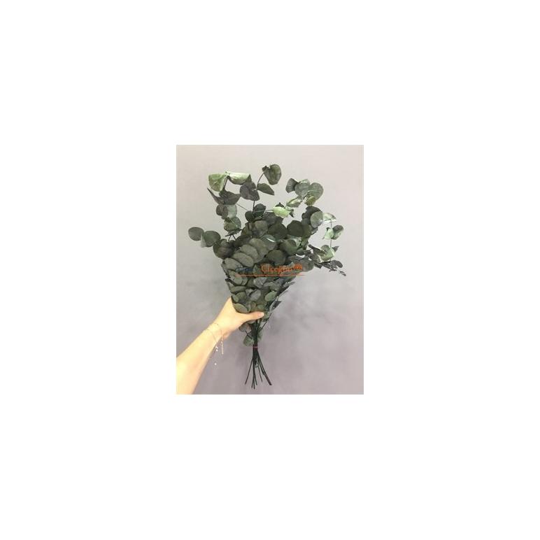 Şoklanmış Okaliptus Yaprak Kurutulmuş Okaliptus